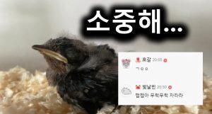 제비 줍줍한 디씨인의 일대기….